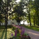 Усадьба Марьино Ленинградская область, парк