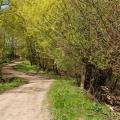 Усадьба Богучарово парк