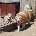 Чукавино. Центр ездового собаководства