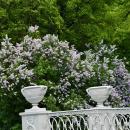 Павловск чугунный мост с вазами