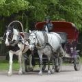 Павловск, экипаж в парке