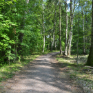 Петергоф Собственная дача, дорожка в парке
