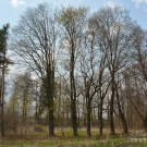 Усадьба Дёгтево, фрагмент парка