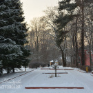 """Усадьба Райки, главная аллея пансионата """"Юность"""""""