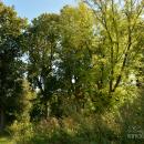 Парк усадьбы Тарасково