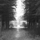 Усадьба Дубровка, еловая аллея (ныне утрачена)
