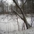 Усадьба Глинки, пруд в парке