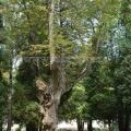 Усадьба Назарьево, парк