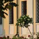 Николо-Радовицкий монастырь