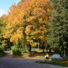 Дом Коротаевой, парк