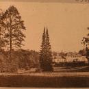 Парк Монрепо двухвершинная пихта и главный дом усадьбы