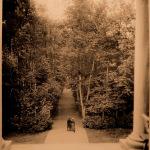 Парк Монрепо, центральная липовая аллея