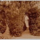 Уголок парка Монрепо