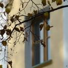 Усадьба Покровское-Рубцово, главный дом, фрагмент фасада
