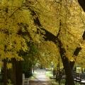 Усадьба Покровское-Рубцово, дорожка в парке