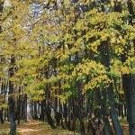 Усадьба Шарапово парк