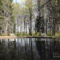 Усадьба Берново, пруд в парке