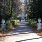 Усадьба Быково, аллея в парке