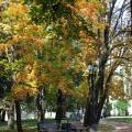 Усадьба Царицыно парк