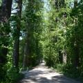 Усадьба Дружноселье, аллея в парке