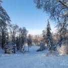 Усадьба Горки Ленинские, парк