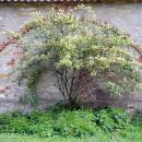 Усадьба Городня Калужская область,стена служебного здания