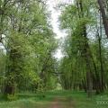 Усадьба Грабцево центральная аллея в парке