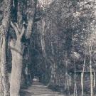 Клементьево. Аллея в парке (1900-1917 гг.)