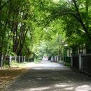 Усадьба Костино (Королёв), дорога к усадебному дому