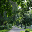 Усадьба Костино Королёв, парк