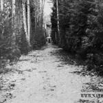Усадьба Костино Королев, аллея в парке