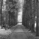 Усадьба Котляково, аллея в парке