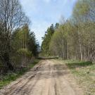 Дорога в усадьбу Курово-Покровское