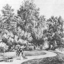 Усадьба Кузьминки. Вид парка.