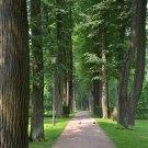 Усадьба Остафьево, аллея в парке