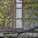 Усадьба Перхушково, главный дом