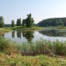 Усадьба Петровское Ганнибалов, пруд в парке