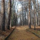 Усадьба Покровское-Стрешнево, дорожка в парке
