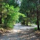 Усадьба Поленово, дорожка в парке