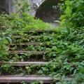 Усадьба Пущино, лестница в парке