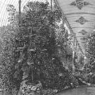 Дворец Разумовского на Гороховом поле, оранжерея