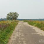 Дорога в усадьбу Щербово
