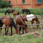 Усадьба Старожилово, конный двор
