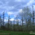 Усадьба Стуловых (Чекмариха), фрагмент парка, фото Натальи Бондаревой 2005 г.