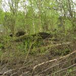 Усадьба Стуловых (Чекмариха), руины главного дома, фото Натальи Бондаревой 2005 г.