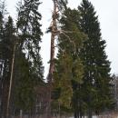 Усадьба Свистуха, фрагмент парка