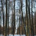 Усадьба Васильевское Повалишиных, парк