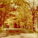 Усадьба Волышово аллея в парке