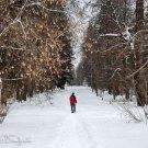 Усадьба Волынщина-Полуэктово, подъездная аллея