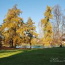 Усадьба Вязёмы, фрагмент парка